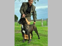 AustralianChampionBattista_Frank01