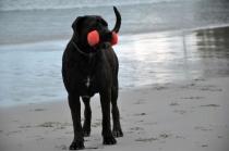 HOPE_BeachDumbBell
