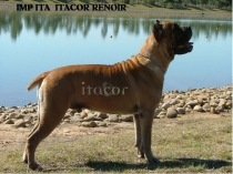 IMP-ITA-RENOIR-SIT-(1)