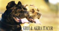 ItalianImportSirio_Akira